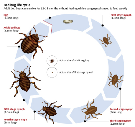 Ecoraider For Pest Management Professionals The Life Cycle Of The