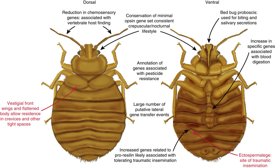 Bobs Furniture Bed Bugs 2014 bed bugs bipolar for life
